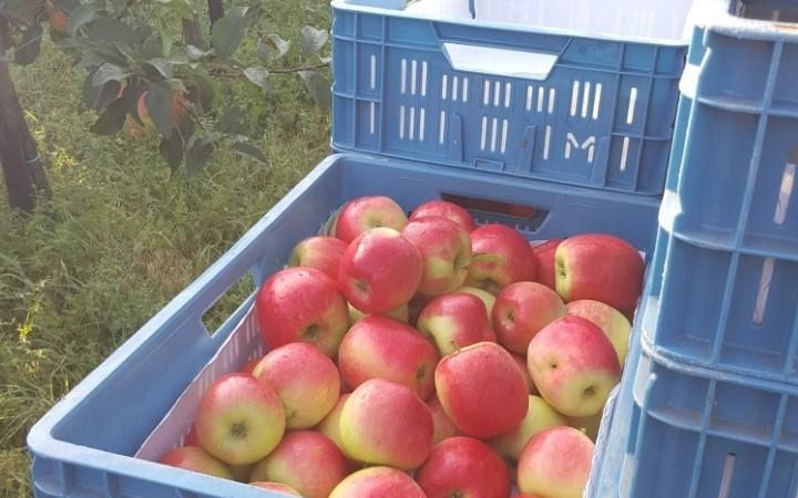 Nieuwe oogst appels en peren!