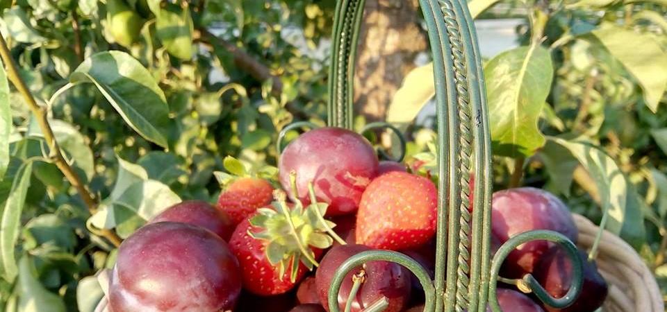 Heerlijk Hollands zomerfruit!
